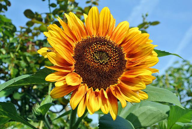 Plant, Nature, Summer, Flower, Leaf