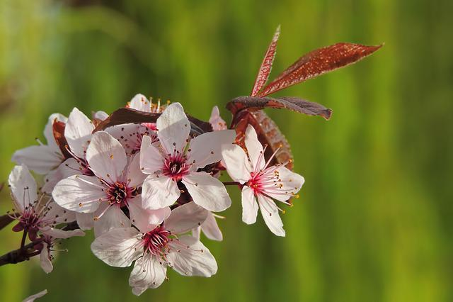 Tree, Flowers, Nature, Plant, Leaf