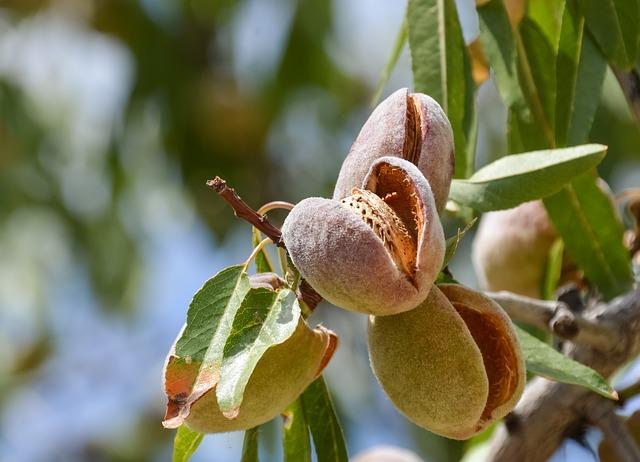 Nature, Flora, Leaf, Tree, Garden, Food, Agriculture