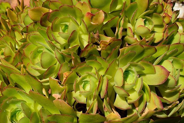 Cactus, Nature, Leaf, Plant, Green