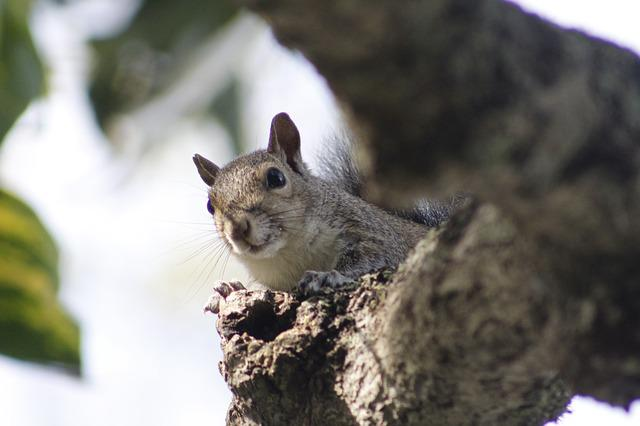 Squirrel, Branch, Wood, Leaf, Animal, Nature, Forest