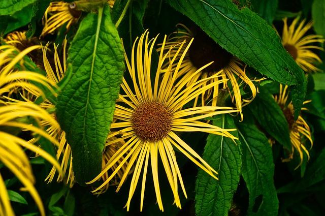 Nature, Leaf, Plant, Summer, Flower, Summer Flower