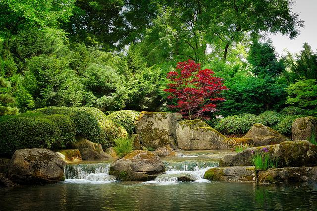 Nature, Waters, Tree, Leaf, River, Bach, Garden