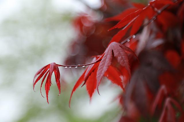 Nature, Some People Don't, Winter, Leaf, Flowers