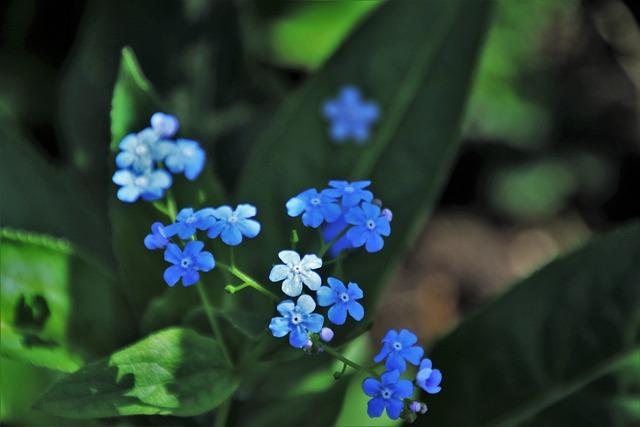Nots, Spring, Nature, Plant, Leaf, Flower