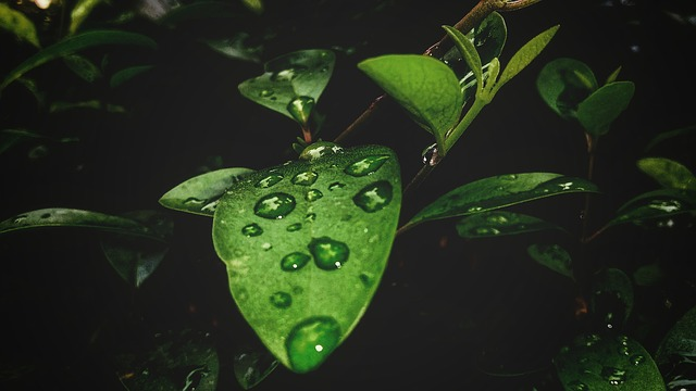Leaf, Nature, Flora, Drop, Garden, Outdoors, Freshness