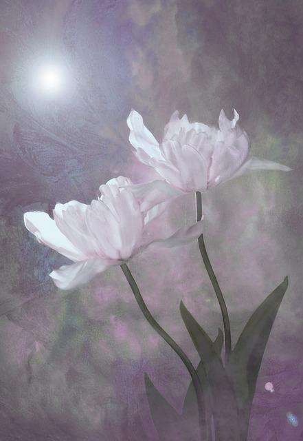 Flower, Plant, Nature, Leaf, Summer, Petal, Floral