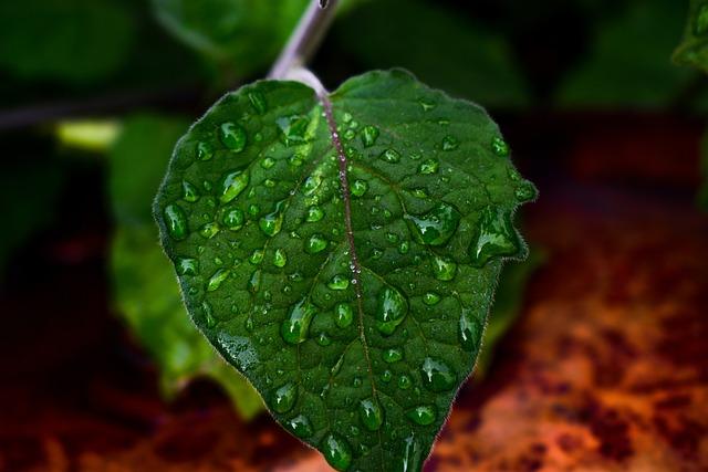 Leaf, Plant