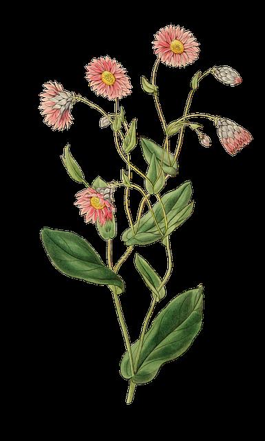 Plant, Nature, Leaf, Flower, Growth, Blossom, Bloom