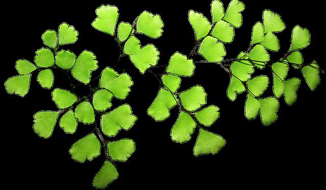 Fern, Leaf, Plant