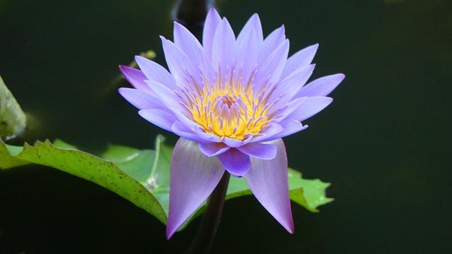Nature, Plant, Leaf, Flower