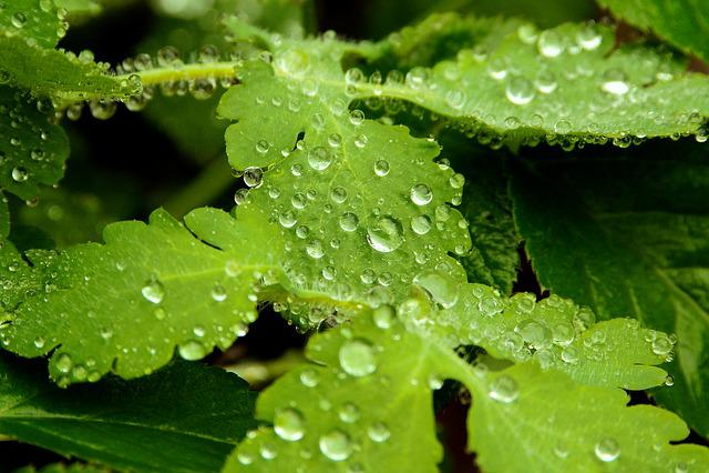 Leaf, Nature, Plant, Rain, Environment, Pearl, Growth
