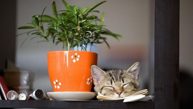 Pot, Desktop, Flora, Leaf, Table, Cat, Flower