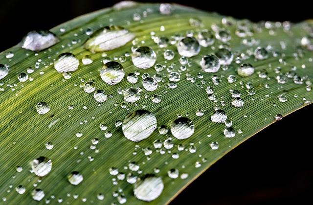 Raindrop, Drip, Rain, Water, Wet, Close, Leaf