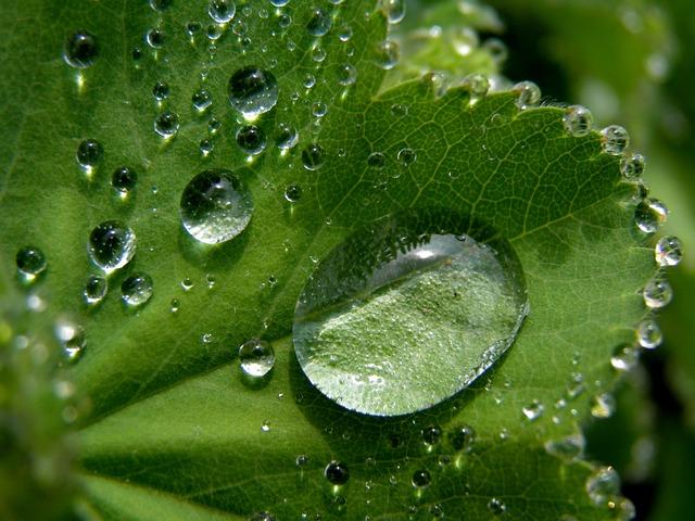 Leaf, Detail, Raindrop, Nature, Mood, Green, Plant