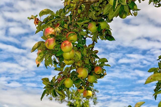 Tree, Leaf, Nature, Fruit, Branch, Summer, Season