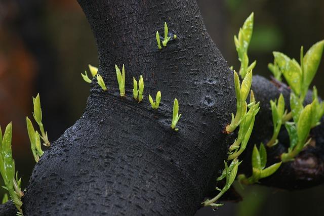 Shoots, Nature, Leaf, Garden, Flora, Closeup, Growth
