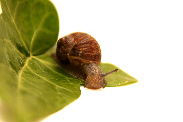 Snail, Animal, Leaf, Green, Flora, Wet, Rain, Drops