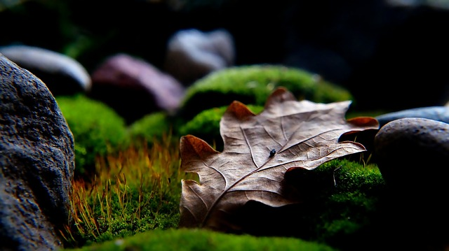 Nature, Plants, Dry, Leaf, The Stones, Green, Moss