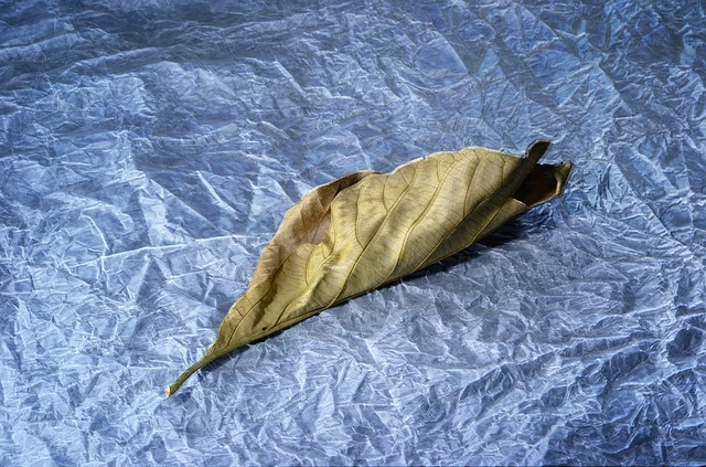 Light Painting, Leaf, Dried Leaf, Tissue Paper, Light