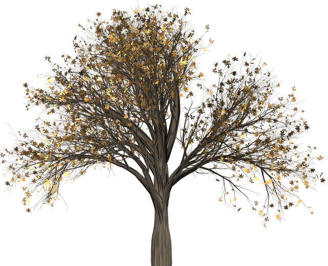 Tree, Elm, Elm Tree, Isolated, Leaf, Autumn, Fall