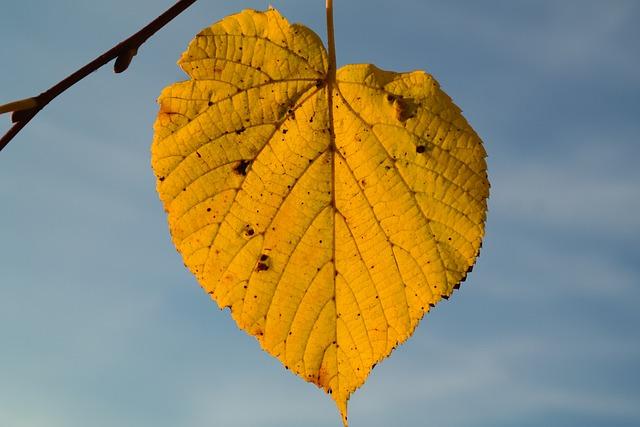 Lime Leaf, Autumn, Yellow, Leaf Coloring, Leaf Veins