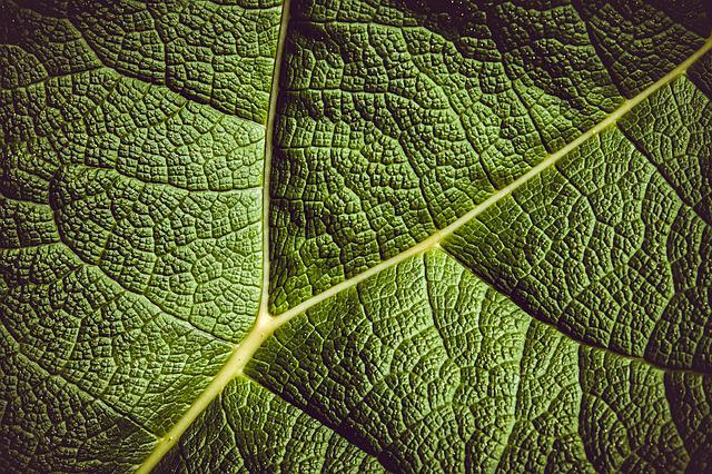 Leaf, Mammoth Sheet, Giant Leaves, Leaf Veins, Plant