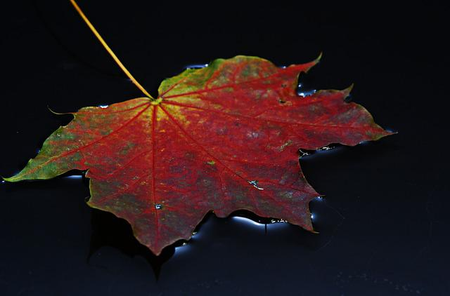 Leaf, Autumn Leaf, Colorful, Rain, Water, Autumn