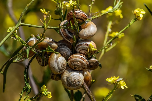 Nature, Flora, Leaf, Snails, Colony, Wildlife