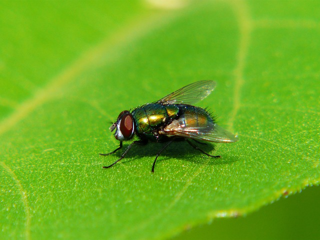 Fly, Insect, Wing, Green, Macro, Leaf