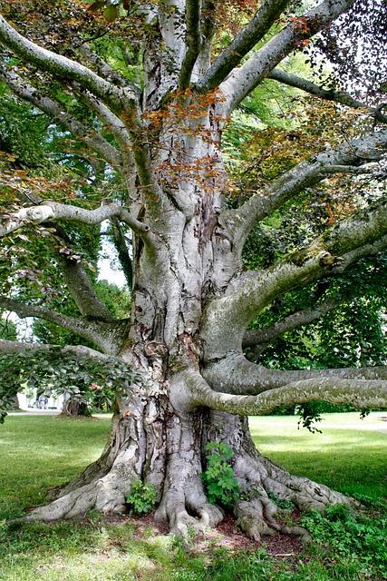 Tree, Wood, Nature, Landscape, Park, Leaf, Summer