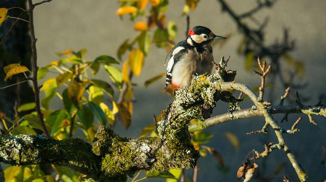 Bird, Nature, Tree, Animal World, Leaf, Woodpecker