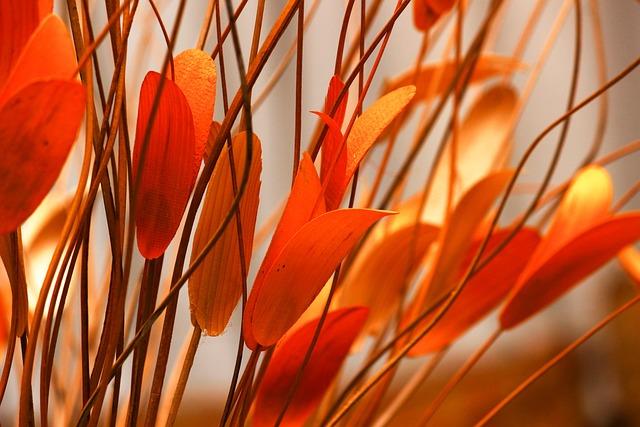 Leaf, Orange Leaves, Cuttlefish Leaves, Orange, Yellow