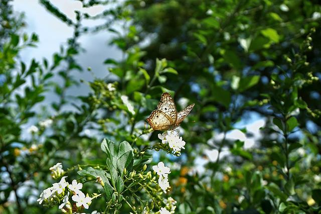 Butterfly, Insect, Wings, Leafs, Sky