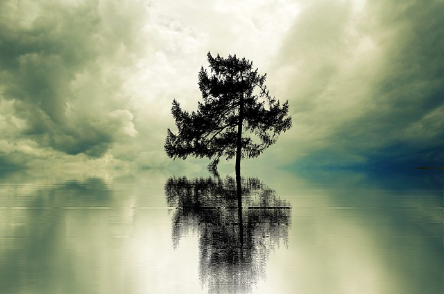 Loneliness, Tree, Lonely, Landscape, Leave, Rest, Still