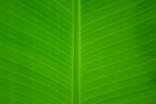 Banana, Leave, Green, Nature, Leaf, Fresh, Healthy