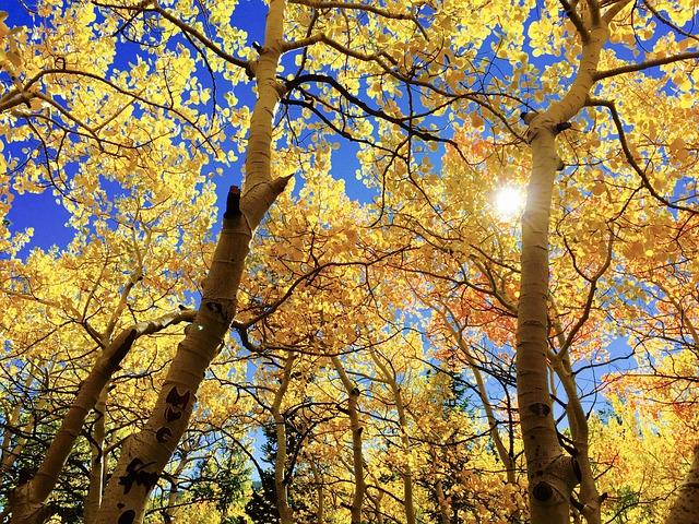 Leaves, Fall, Au, Autumn, Season, Tree, Brown Tree