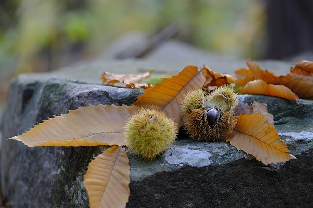 Autumn, Leaves, Chestnut, Chestnuts