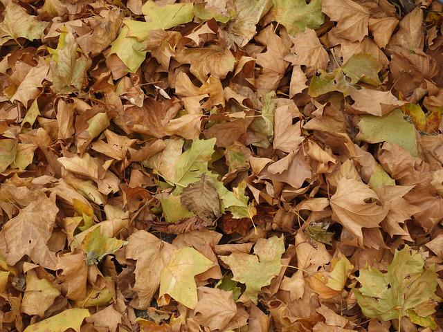 Leaves, Ground, Texture, Platanen Leaves, Autumn, Dry