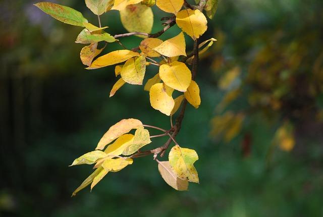 Leaves, Autumn, Autumn Leaves, Nature, Golden Autumn