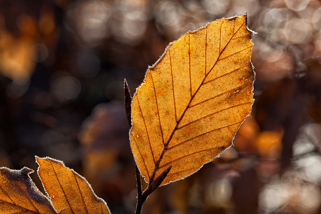 Leaves, Leaf, Fall Foliage, Autumn, Autumn Light