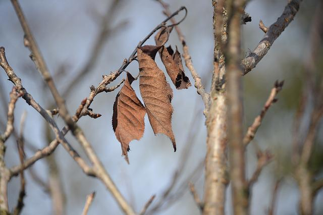 Leaves, Arid, Aesthetic, Autumn, Transient