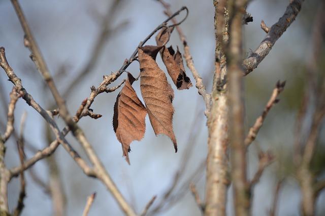 Leaves, Arid, Aesthetic, Autumn, Transient
