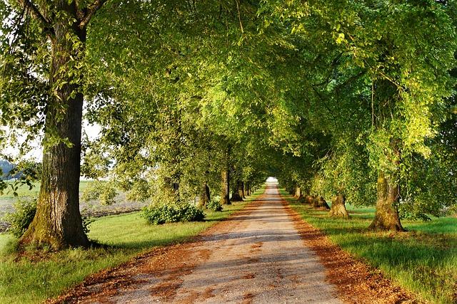 Avenue, Fall Foliage, Nature, Away, Trees, Leaves, Road