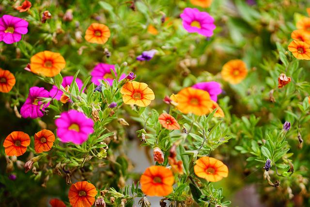 Pink Flower, Pink, Orange, Flower, Leaves, Blossom