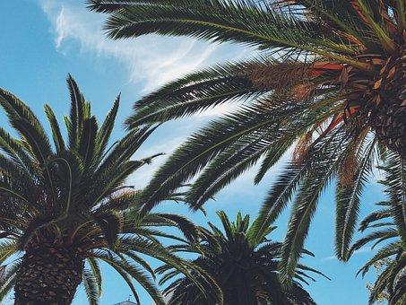 Blue, Bright, Happy, Leaves, Palm Tree, Palm Trees