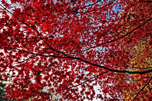 Foliage, Leaves, Autumn Leaves, Red Leaves, Branch