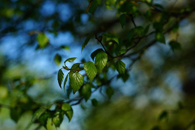 Branch, Leaves, Spring, Young, Green, Nature, Macro
