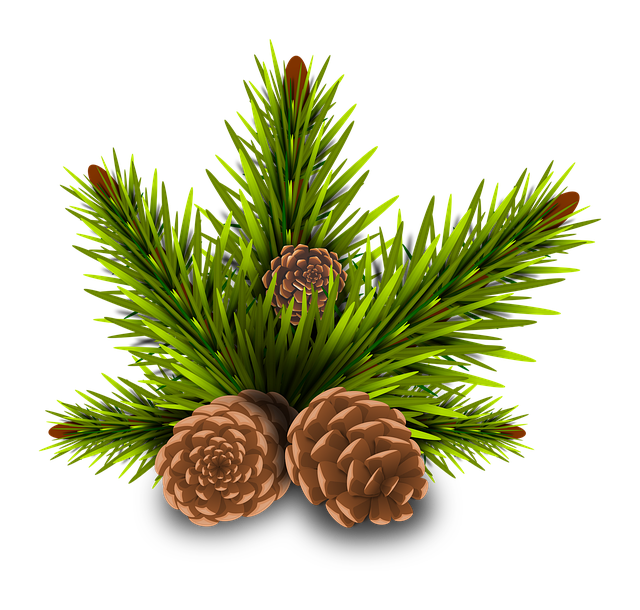 Pinheiro, Pine Cones, Tree, Branch, Rama, Leaves