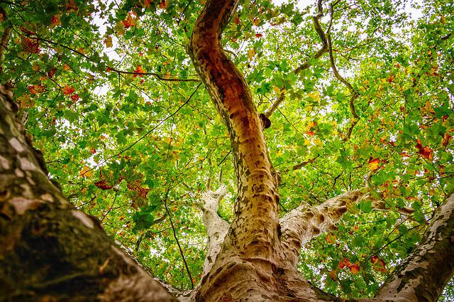 Tree, Leaves, Branch, Canopy, Crown, Bark, Nature